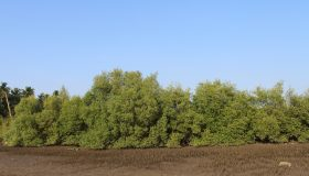 Mangroves Conservation Project Sindhudurg,Maharashtra